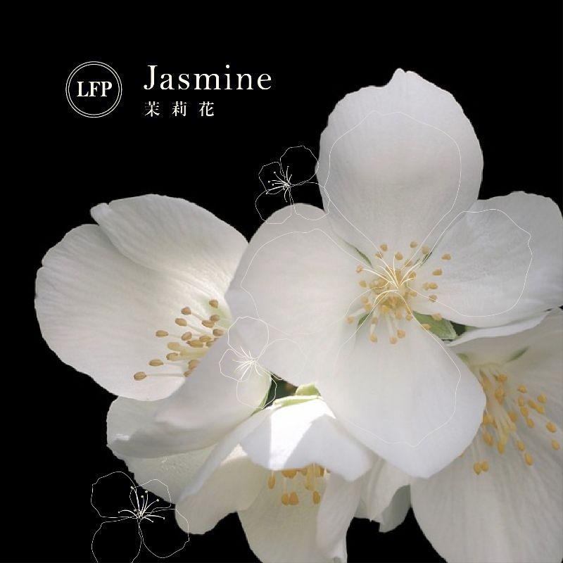 配方名稱:茉莉花 | LFP: 香料香水實驗室,客製專屬香水