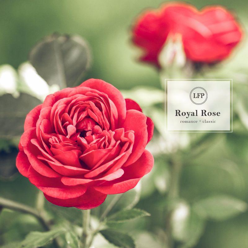 配方名稱:典雅玫瑰   LFP: 香料香水實驗室,客製專屬香水