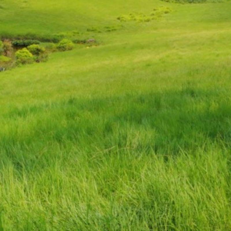 配方名稱:草原 | LFP: 香料香水實驗室,客製專屬香水